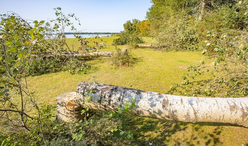<p>De bomen zijn afgezaagd en de vandaal of vandalen hebben deze laten liggen.</p>