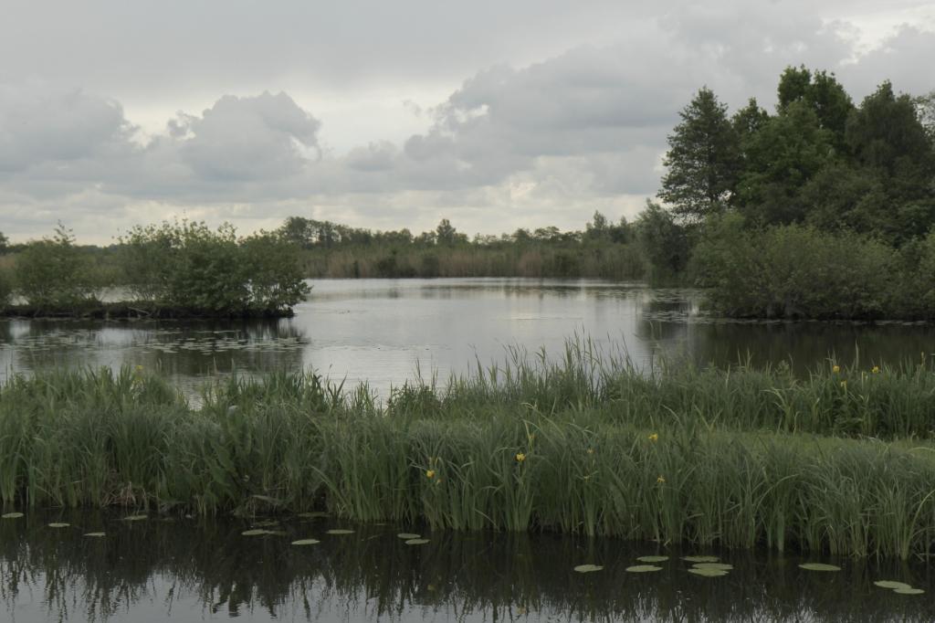 Een foto gemaakt tijdens een rondvaart van Staatsbosbeheer vanaf de Westbroekse Binnenweg Foto: wimw © De Vierklank