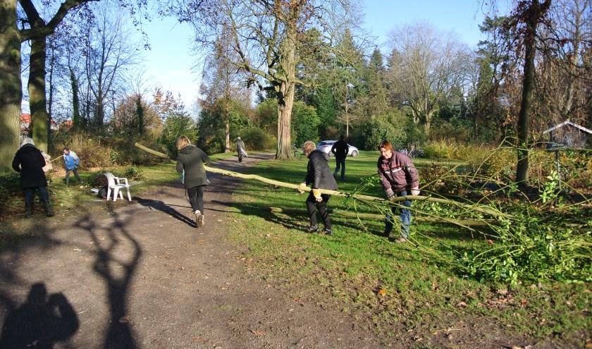 Vrienden van het Van Boetzelaerpark verslepen een gesnoeide boom, om daarna kort gezaagd te worden. (foto Frans Poot)