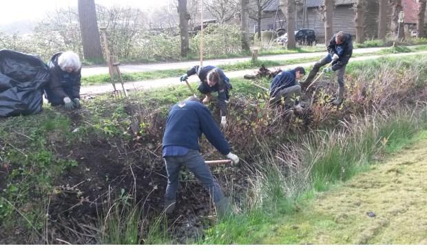 In 2016 wordt de Japanse Duizendknoop uitgegraven  door een ploeg van Stichting Landschapsbeheerploegen Utrecht.  Foto: foto Bert Tuinzaad © De Vierklank