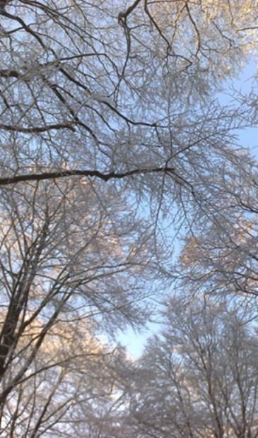 De magie van de winterse natuur.
