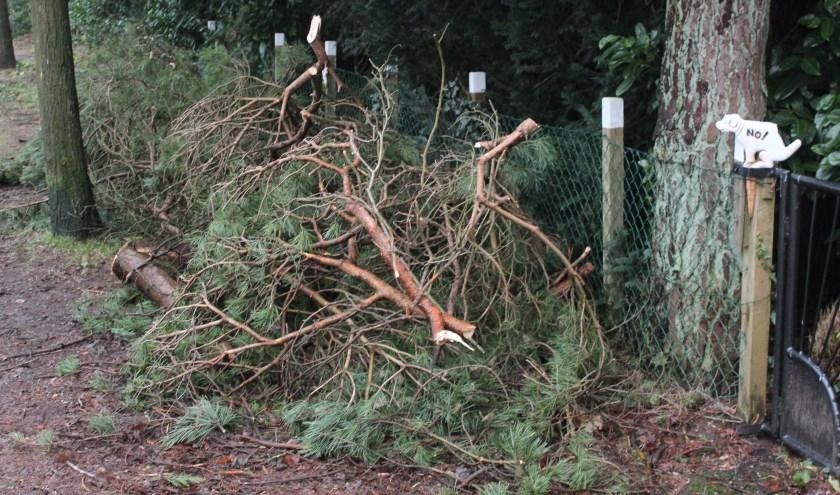 HvdB Yes.jpg Gemeente De Bilt zorgt voor verwijdering van bomen en takken.