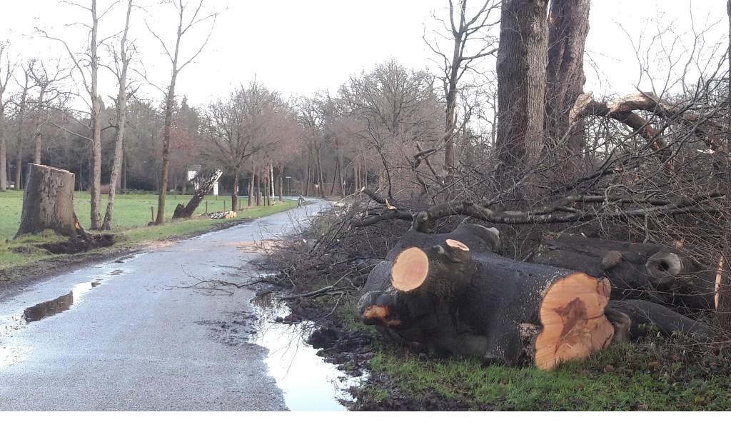 Een storm met windstoten van meer dan 120 kilometer per uur velde op 18 januari veel bomen.  © De Vierklank