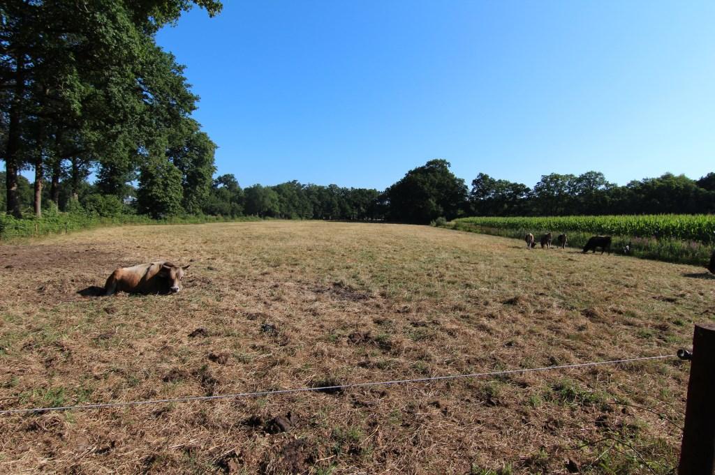 Aanhoudende droogte zorgt voor dorre vlaktes in plaats van sappige weilanden.  © De Vierklank