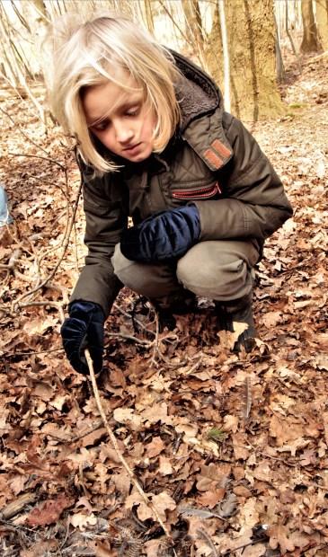 Fedde vindt ook een plukplaats van een havik, die een houtsnip had gevangen.