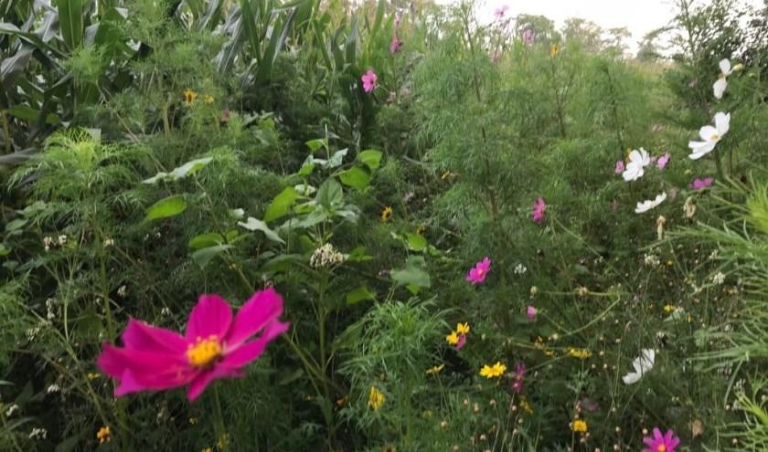 Een lust voor het oog van de vele passanten, grote meerwaarde voor de natuur en paradijs voor de bijen.