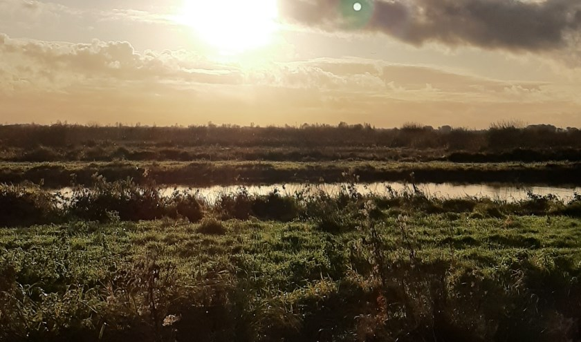 In haiku: Hemelwater-schoon Ontwaakt het polderleven Een gouden morgen