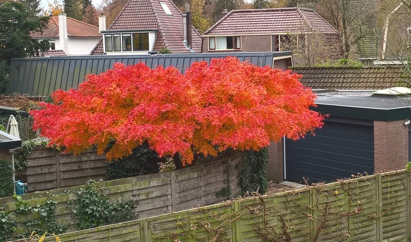 Herfst in mijn eigen tuin