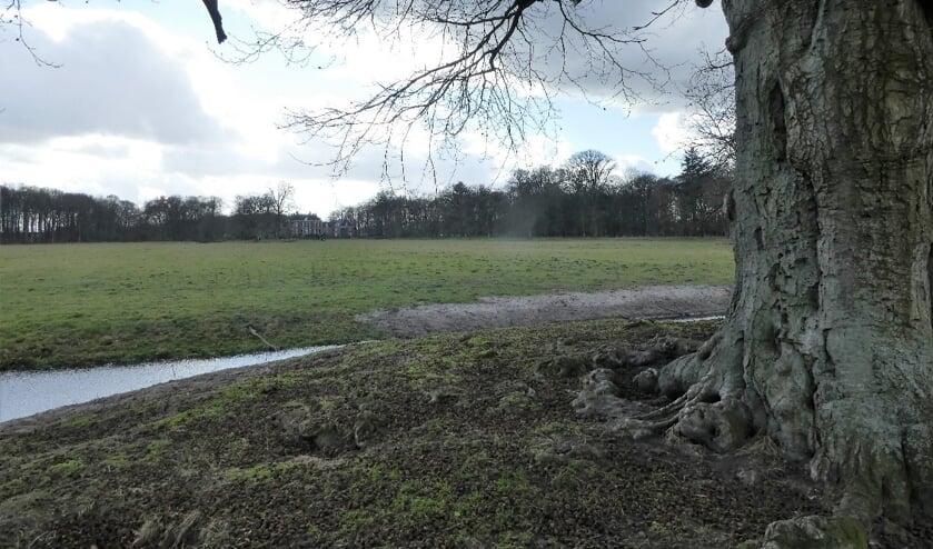 Zicht op Houdringe, met op de voorgrond de eeuwenoude beuk; ook bekend als 'De kabouterboom'.