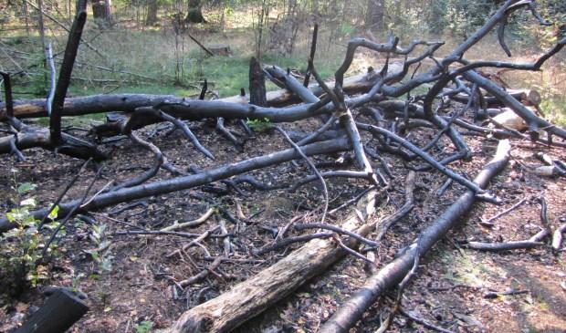 De gevolgen van illegaal vuur stoken in het bos van Eyckenstein (eerder) zijn goed zichtbaar (foto Lex van Boetzelaer).  © De Vierklank