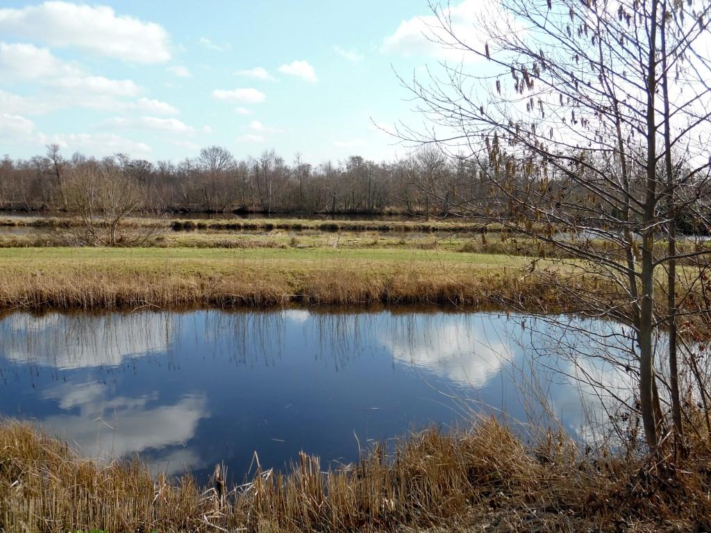Nu kijken we terug langs de grens naar de Burg. Huydecoperweg  door het noordelijkste deel van de Molenpolder. Molenpolder is een 75 ha groot natuurgebied met  trekgaten, legakkers en moerasbos.  © De Vierklank