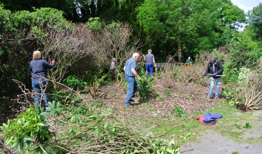 Precies een jaar geleden gaven vrijwilligers de rododendrons een flinke snoeibeurt. (foto Frans Poot)