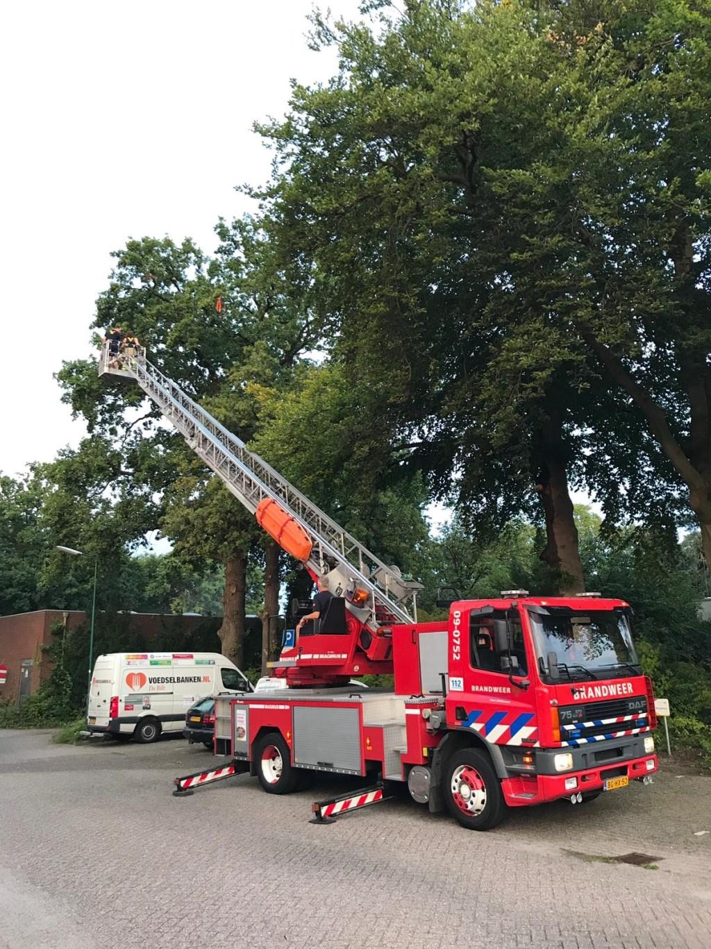 Met de ladderwagen wordt de aap uit de boom gehaald.  © De Vierklank