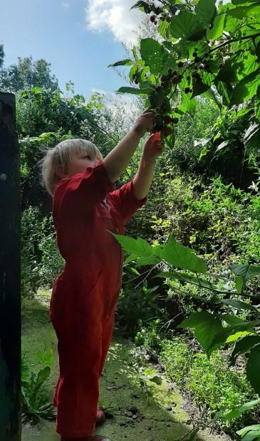 In haiku:  Een tuin der lusten  Schenkt scheutig van haar vruchten  Zoete begeerte
