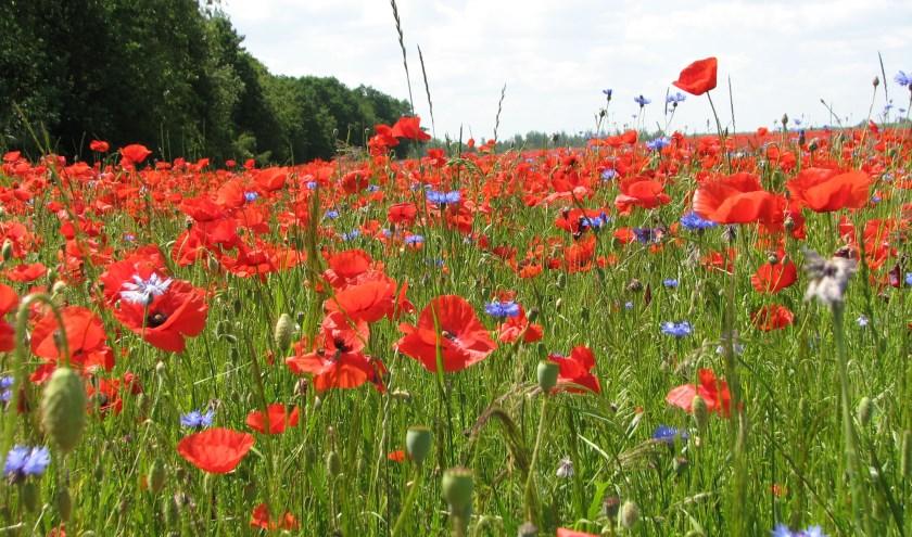 Biodiversiteit zorgt voor frisse lucht, schoon water en bestoven gewassen.