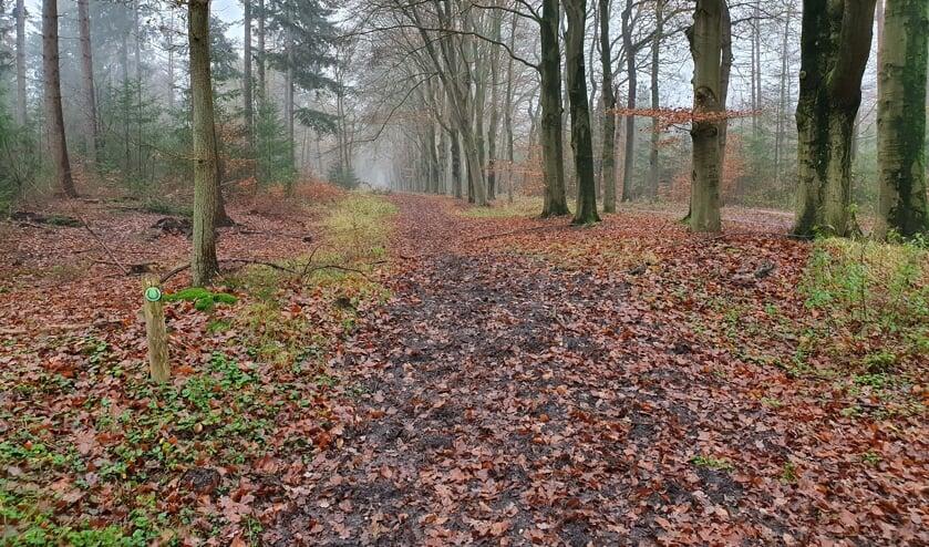 Ruiterpad in de omgeving van Lage Vuursche. (foto Lex van Boetzelaer)