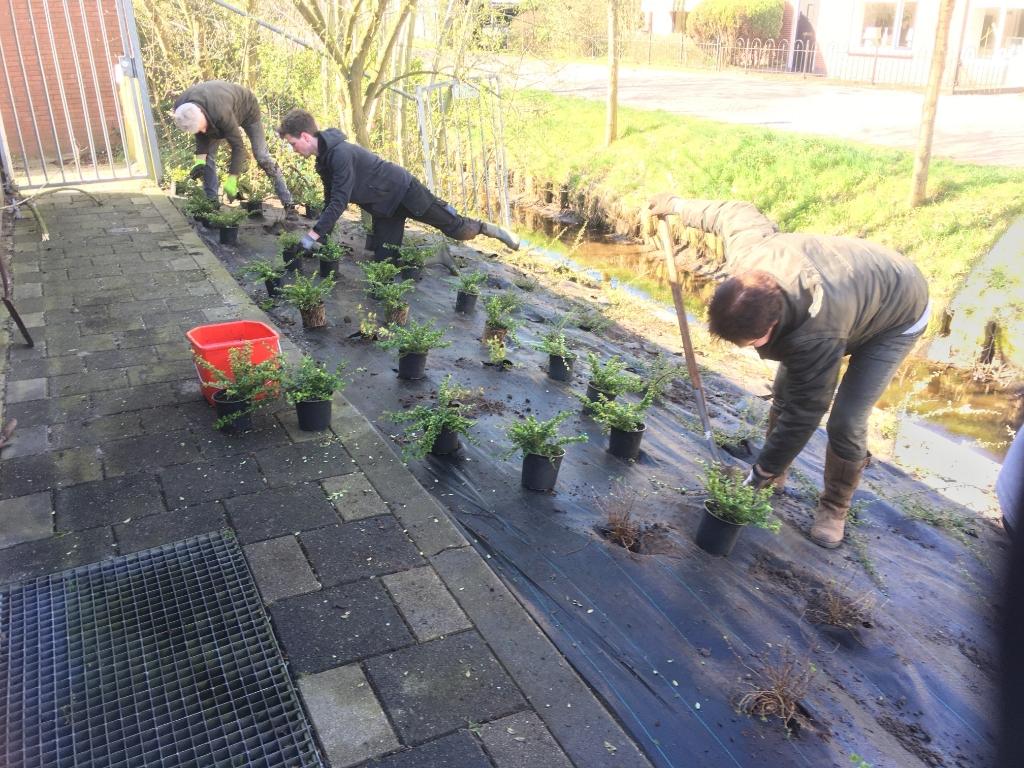 Beplanting met bij-vriendelijke planten naast het Dorpshuis Westbroek. (foto José Stortelder) Foto: José Stortelder © De Vierklank