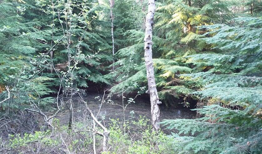 De Canadezen hebben veel Duitse munitie afgevoerd, maar sommige stukken lieten ze springen in een springgat in het bos van Venwoude. Het is nu grotendeels gevuld met water en is deels overwoekerd door struikgewas.