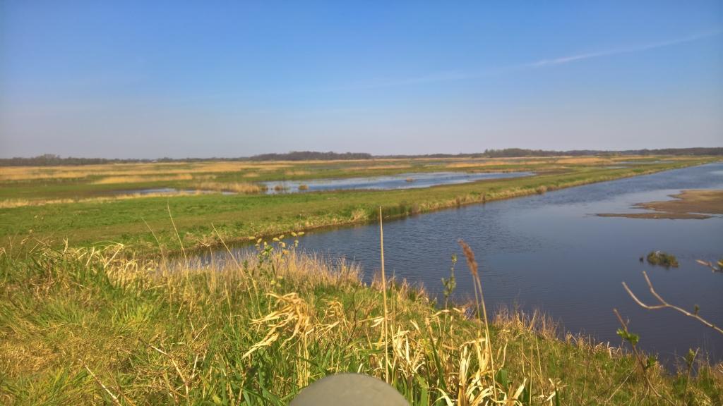 Zicht op deel van Oostelijke Binnenpolder (foto 9 april 2020) vanaf vogelkijkpunt (foto Wigle Braaksma). Foto:  © De Vierklank