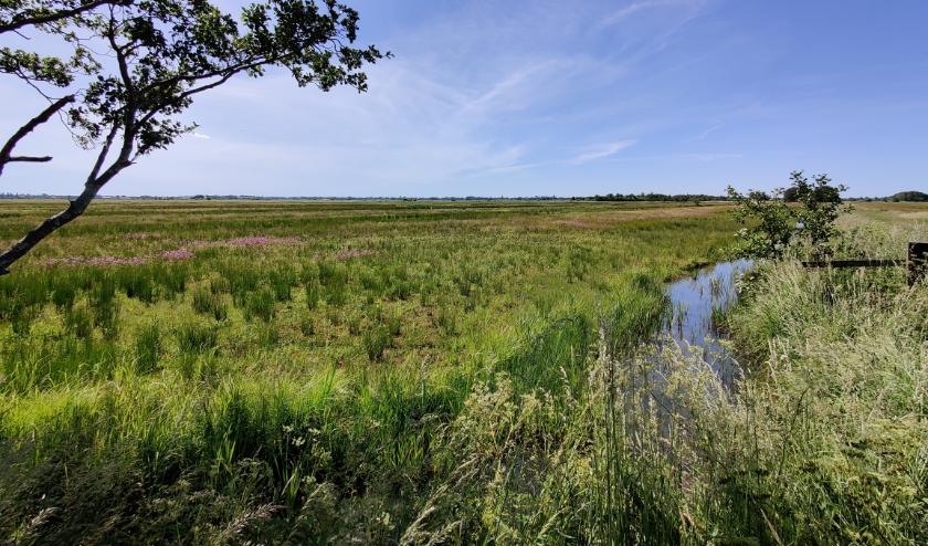 Er wordt geadviseerd het gebied niet te betreden vanwege 'kwetsbare vegetatie'. In ieder geval levert het nu al weer mooie plaatjes op.