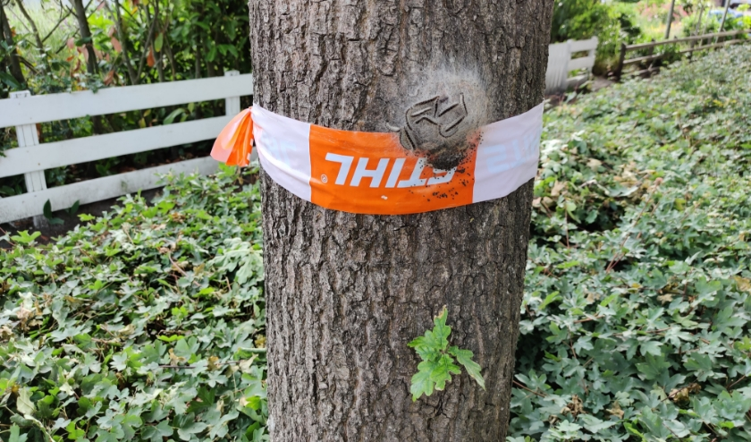 Op een boom aan de fietszijde van de Dorpsweg in Maartensdijk heeft de rups zich genesteld.