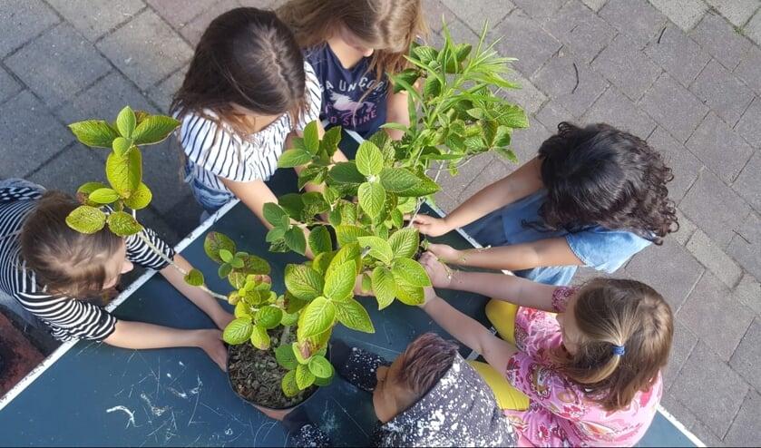 Kinderen helpen mee met het planten van de heesters