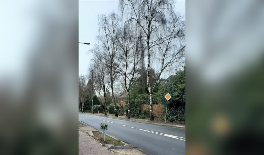 Deze bomen zijn gemerkt voor kap.