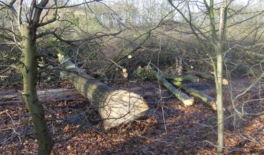 Inmiddels zijn al heel veel bomen gesneuveld.