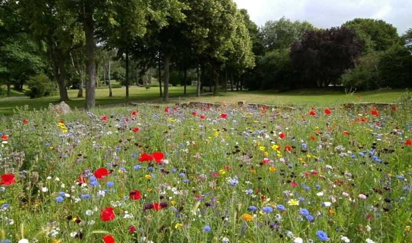 <p>De Bilt krijgt meer variatie in gras- en kruidenvegetatie.</p>
