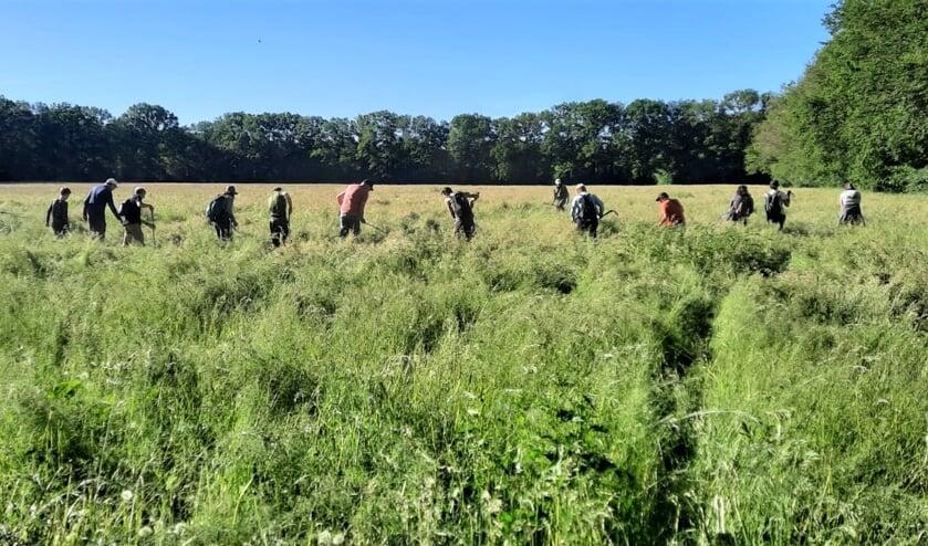 <p><em>Nauwkeurig in colonne worden de weilanden uitgekamd op zoek naar reekalfjes.</em></p>
