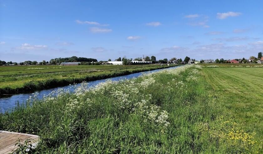 Op de weilanden tussen de Koningin Wilhelminaweg en Ruigenhoeksedijk wordt binnenkort begonnen met de bouw van de oefengolfbaan.