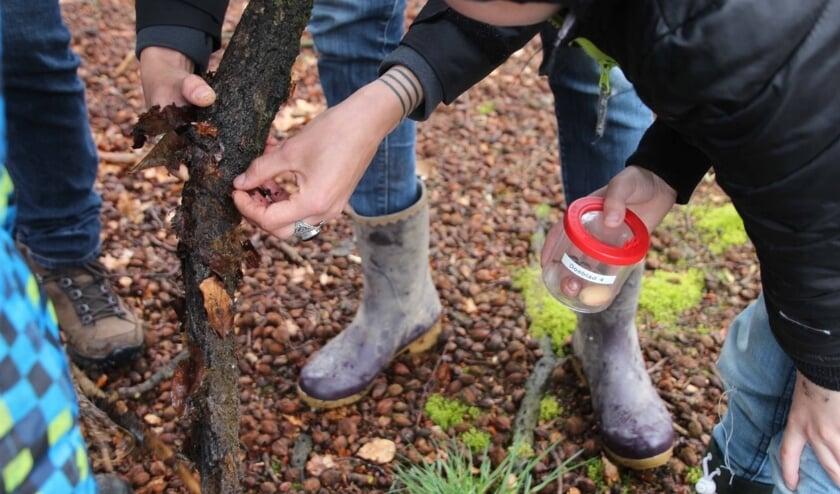 Kleine beestjes vinden in het bos vereist speurderskwaliteiten.
