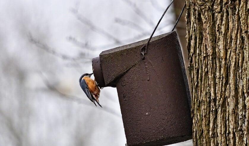 Eindhovenaren kunnen een gratis nestkastje aanvragen. (Foto: PixaBay).