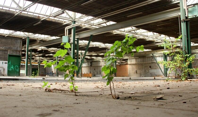 <p>&bull; De bedrijfsloods op het terrein van Betondak maakt plaats voor woningen.</p>