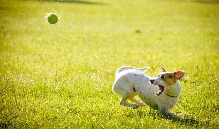 <p>&bull; Hondenbezitters die zich niet aan de regels houden, zorgen voor veel ergernis en problemen.</p>