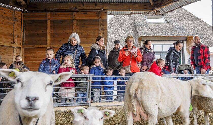 • Dit jaar geen lammetjesdagen bij kaasboerderij Hoogerwaard.