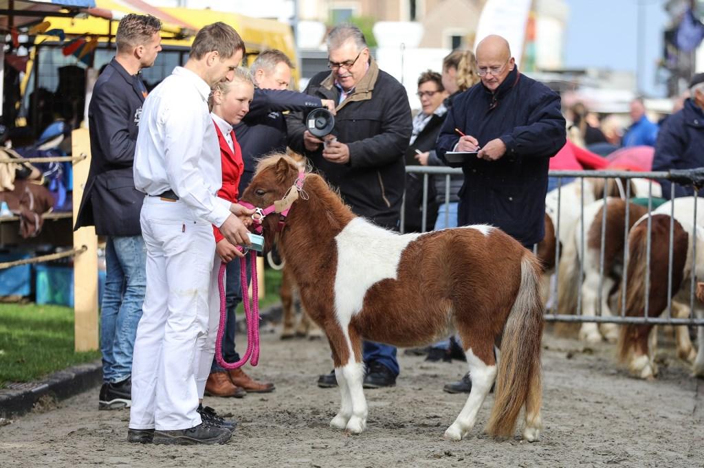 • Paardenmarkt Ameide 2019. Foto: Rick den Besten  © Alblasserwaard