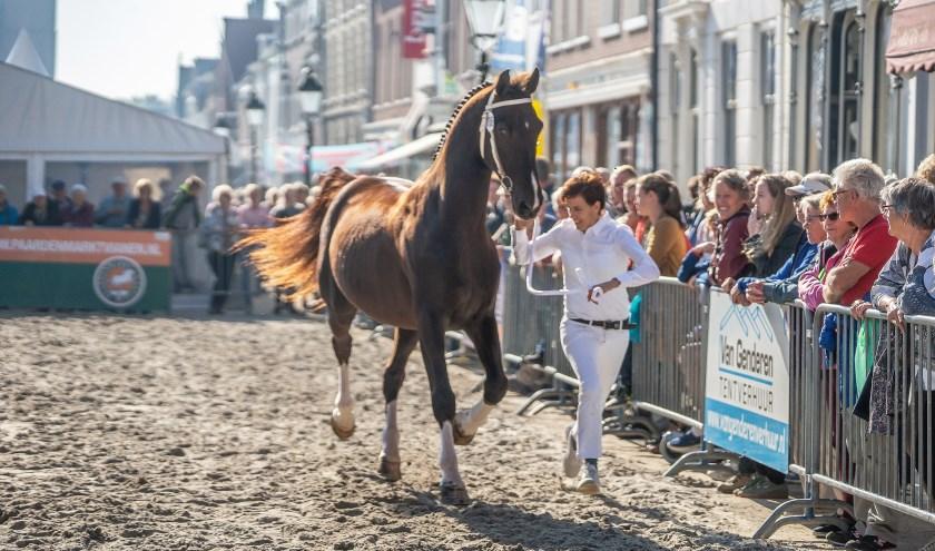 Paardenmarkt Vianen 2018