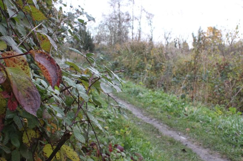 • Natuurwacht Bommelerwaard wil graag dat deze natuur behouden blijft. Er zijn kleine huizen gepland.