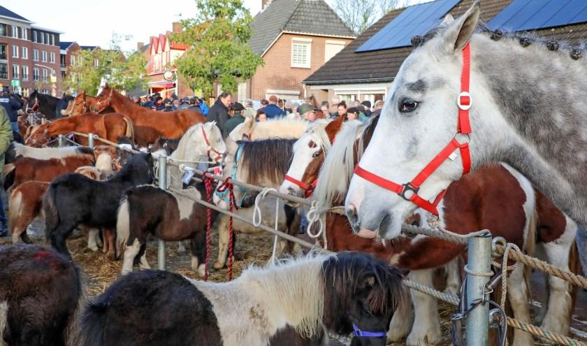 300 jaar Paardenmarkt