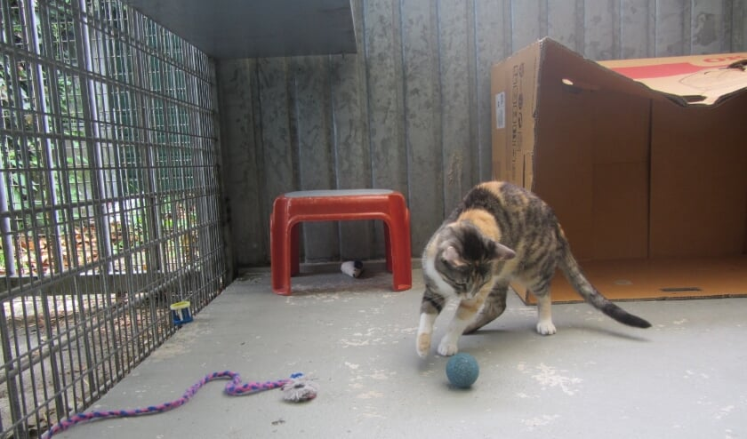 <p>&bull; De dieren in Dierentehuis Vijfheerenlanden merken niets van de financi&euml;le zorgen.</p>