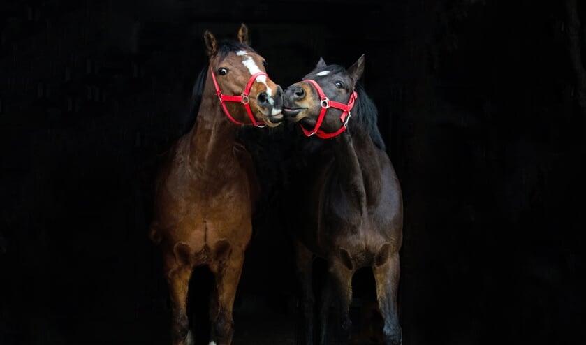 • Feiko en Massie, twee van de manegepony's op De Paardesprong.