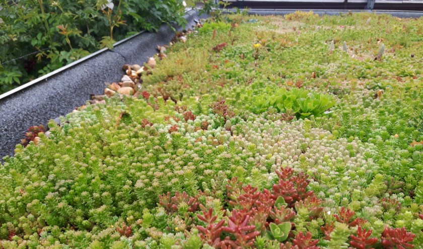 • Een groen dak zorgt onder andere voor betere isolatie.