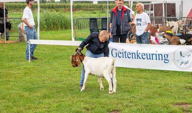 Bokkenkeuring in Lexmond Foto: Nico Van Ganzewinkel © Vianen