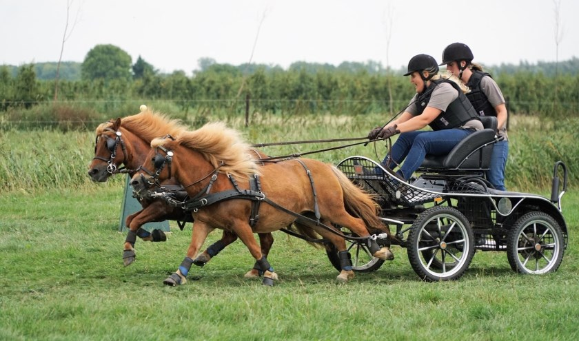 • Een tweespan pony's in de strijd om de Potlooiencup.