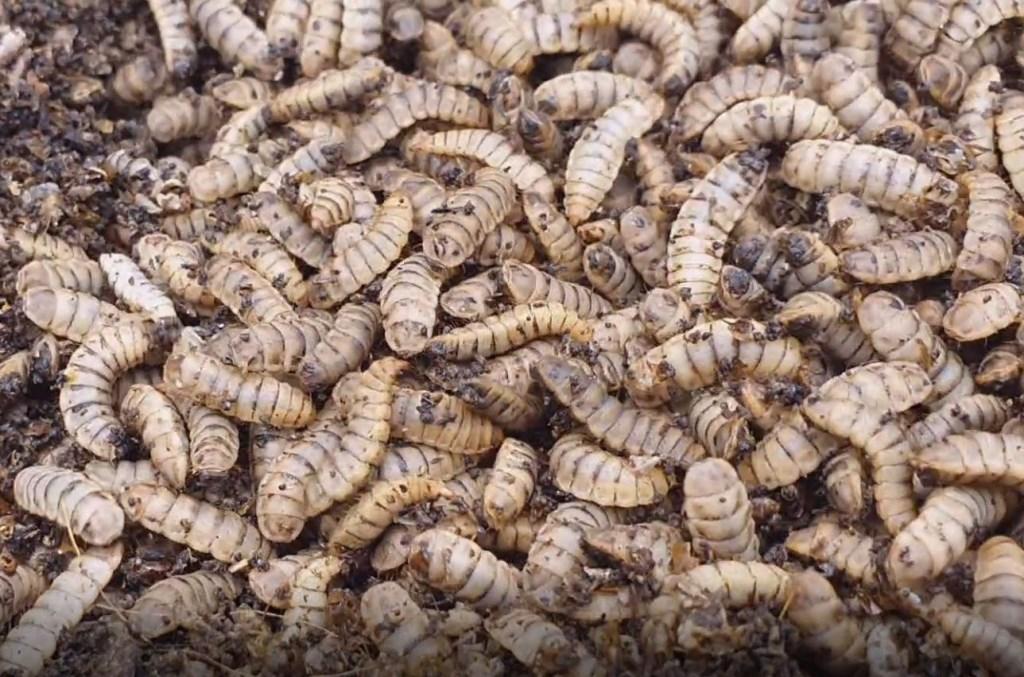 Foto: InsectoCycle © Alblasserwaard