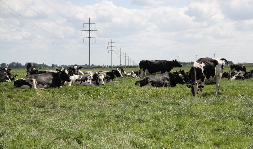 • Muizen bedreigen het grasland van de boeren.