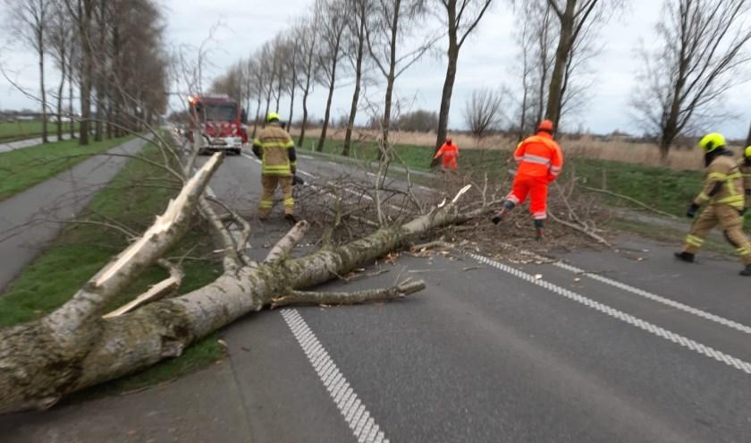 • Omgewaaide boom op de N216 bij Ottoland.