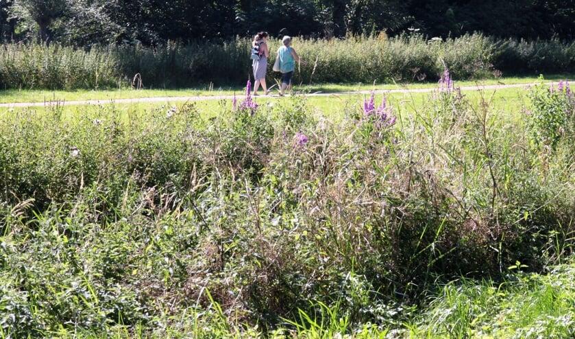 • Ook op de smalle paden van het Loetbos moeten recreanten anderhalve meter afstand van elkaar bewaren.