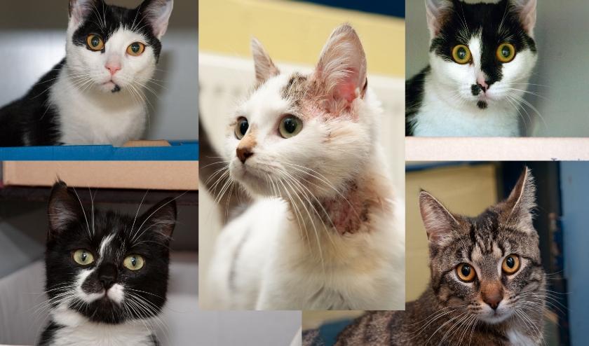 • De vijf achtergelaten katten.